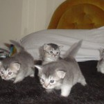 Polly's Second Litter 02