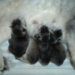 Leonora's First Litter 03