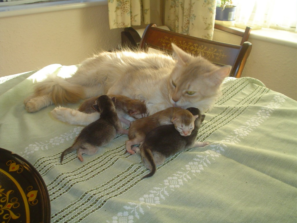 Grandmother Bella & Grandkittens