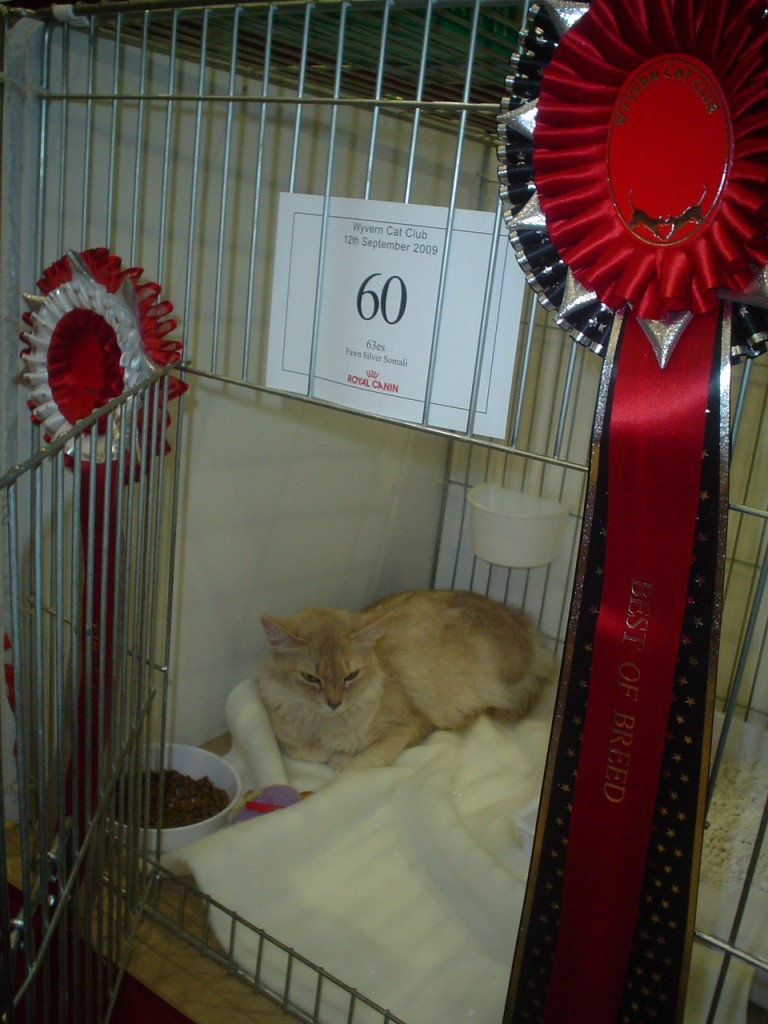 Bella Wyvern Show